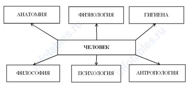 Основные науки о человеке схема
