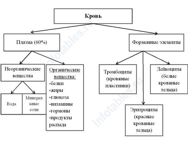 Состав крови схема
