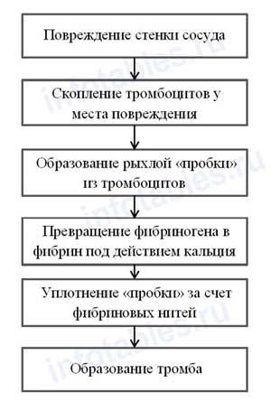 схема свертывание крови