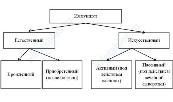 схема имунитета человека
