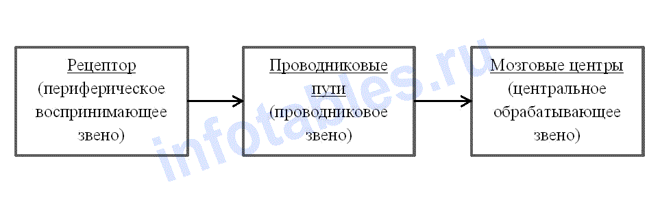 отделы анализатора схема