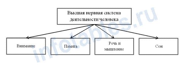 Высшая нервная деятельность человека схема