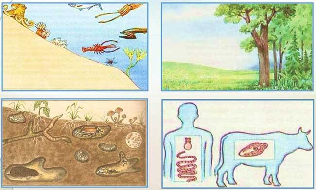 4 среды обитания живых организмов рисунок