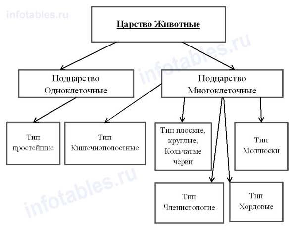 Система животного мира (Схема,