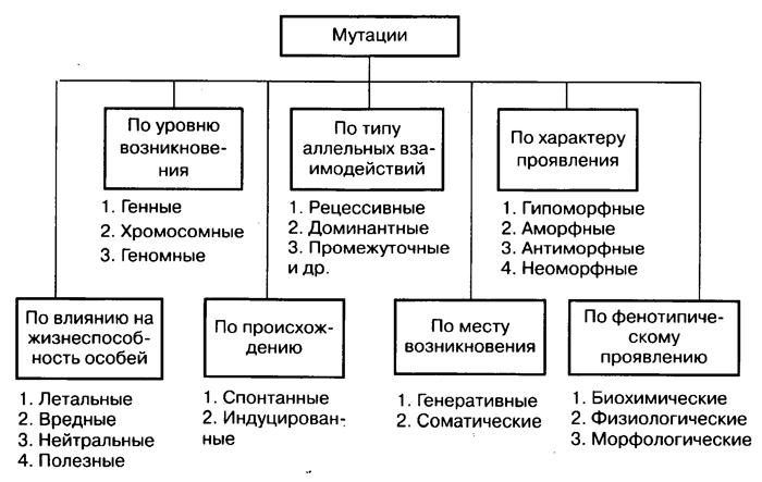 Общая классификация мутаций схема