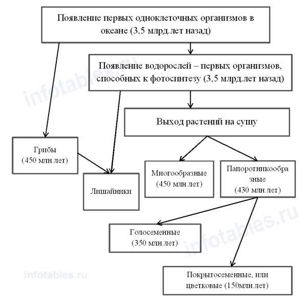 Основные этапы развития
